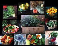 GARDEN COLLAGE-done for my Realtor when I put my house up for sale.