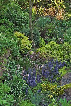 The New Jersey garden of author Ken Druse.