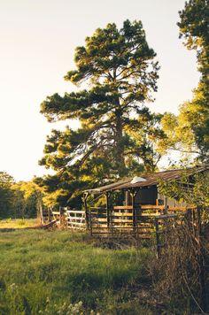 Golden hour drive in #Texas. www.jennylynphotography.com https://www.facebook.com/JennyLynPhotography/ #photography #photographer