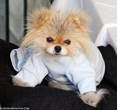 Lisa Vanderpump's pet Giggy .