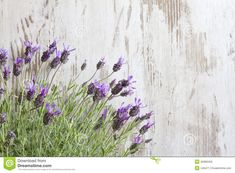 Lavender Flowers On Vintage Wooden Boards Background Stock Photo - Image of bloom, fresh: 40990450 Lavender Cottage, Lavender Flowers, Vintage Flowers, Bouquet, Bloom, Paper Crafts, Concept, Sky, Stock Photos