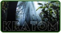 Get the Inside Scoop and Keep Yourself in the Know about the War on Kratom happening in YOUR country!