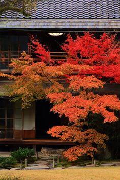 Feng Shui Landscape, Japan Landscape, Autumn Leaf Color, Autumn Leaves, Japanese Garden Design, Japanese House, Japanese Colors, Leaf Images, Autumn Scenery