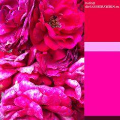 #farbpalette #farbprofil #farbkombination #farbe #pink #rot #rosa #magenta #purpur #colorpalette #colourpalette #inspiration #color #colour #red #hotpink #kleurenpalet
