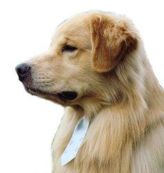 Eduque seu cão, ctc Sorocaba, Golden Retriever, Labrador