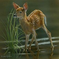 Image from http://ww1.prweb.com/prfiles/2014/10/02/12221594/Alert%20-%20Whitetailed%20Fawn%20by%20Karen%20Latham.jpg.