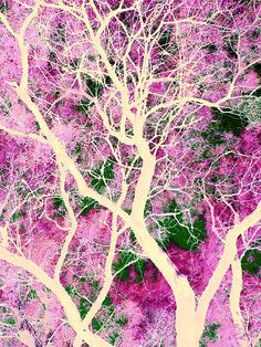 This is one of those writes which filter up from the subconscious. I have some idea of what it means, but maybe not really--maybe it is just a dream. Tree Art, Yahoo Images, Grateful, The Darkest, Image Search, Landscape, Abstract, Artist, Flowers