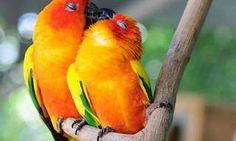 Galeria de imagens que mostram como os animais são capazes de demonstrar carinho e afeição.