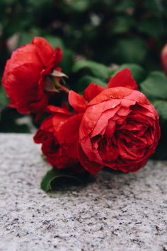 ❤️Red roses