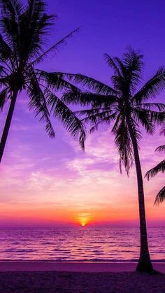 New Palm Tree Wallpaper Purple 15 Ideas Ocean Wallpaper, Summer Wallpaper, Tree Wallpaper, Cute Wallpaper Backgrounds, Pretty Wallpapers, Iphone Wallpapers, Beach Sunset Wallpaper, Florida Wallpaper, Paradise Wallpaper