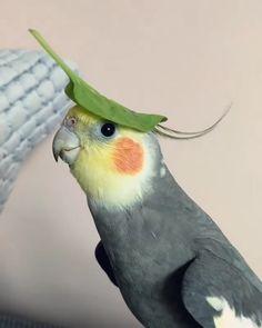 Funny Birds, Cute Birds, Pretty Birds, Beautiful Birds, Animals Beautiful, Cute Funny Babies, Cute Funny Animals, Cute Baby Animals, Animals And Pets