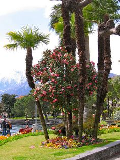 Locarno, Lago Maggiore, Tessin, Switzerland Basel, Beautiful World, Beautiful Places, Berne, Swiss Switzerland, Italian Lakes, Holiday Places, Heaven On Earth, Italy Travel