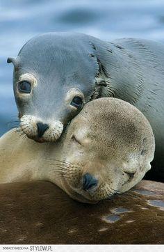 Baby seals...precious.