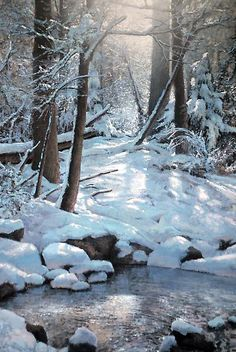 Winter Landscape, Landscape Art, Landscape Paintings, Painting Snow, Winter Painting, Snow Pictures, Nature Pictures, Woodland Art, Winter Scenery