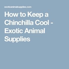 How to Keep a Chinchilla Cool - Exotic Animal Supplies