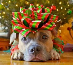 I would love to get one of these under my Christmas tree. :)