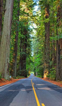 The Avenue of the Giants is America's most peaceful drive