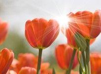 Spring time love!