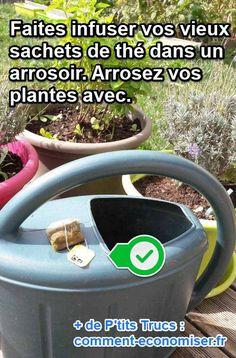 Sachet de thé pour fertiliser les plantes