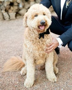 The couple's goldendoodle, Oscar, wore a bow tie for the special event.