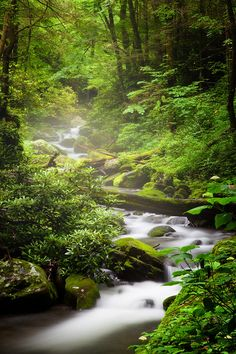 Roaring Fork Creek, Roaring Fork Motor Nature Trail, Great Smoky Mountains National Park, Tennessee