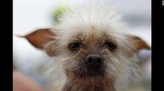 Photos: World's Ugliest Dog Contest - CNN.com