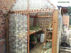 ingenious reuse of plastic bottles for temperate climates (insulation from air in bottles?)  reciclando botellas de plastico. Un invernadero!
