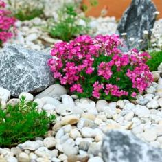 Pros and Cons of Rock Flower Beds