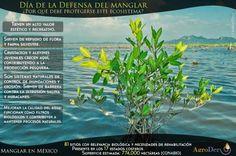 Día Internacional de la defensa del #Manglar ¿Por qué cuidar este ecosistema? #ServiciosAmbientales #Biodiversidad #Mexico #Fauna #Silvestre @AgroDer