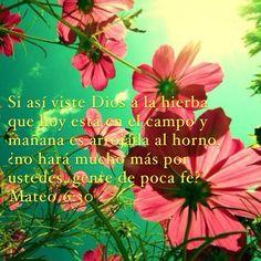 #LoMejorDeSuCreacion #Nosepreocupen #ContóMisCabellos Mateo 6:30