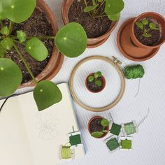 Pilea lovers, soon on our t-shirts!