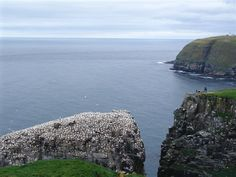 Cape St. Mary's is a magical stop for bird watching on our Adventure Newfoundland May Magic itinerary.