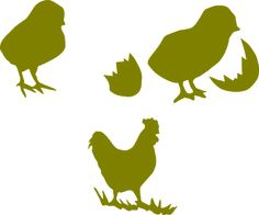 Kylling, Pik, Fjerkræ, Høne