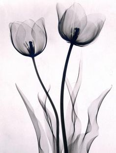 Tulips 1930 Joseph Bellows Gallery - Dr. Dain L. Tasker - Images