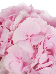 schleierkraut my pink pixel inspirations pinterest cherry blossoms and. Black Bedroom Furniture Sets. Home Design Ideas