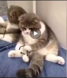 Cute Baby Cats, Funny Cute Cats, Cute Little Animals, Cute Cats And Kittens, Cute Funny Animals, Kittens Cutest, Cute Dogs, Funny Animal Jokes, Funny Cat Videos