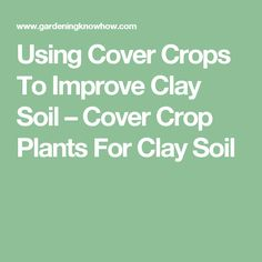 Using Cover Crops To Improve Clay Soil – Cover Crop Plants For Clay Soil