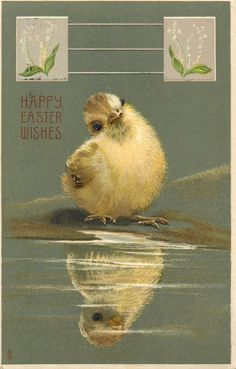 HAPPY EASTER WISHES  white chick looks at its reflection, lily-of-the-valley inserts  Vintage postcard