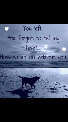 Losing A Dog Quotes Grief Rainbow Bridge Pet Loss Dog Death Quotes, Pet Loss Quotes, Dog Quotes Sad, Death Quotes Grieving, Baby Quotes, I Love Dogs, Puppy Love, Lucky Puppy, Miss My Dog