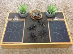 We could play the beetle game where you roll the dice for different body parts! Reggio Emilia, Learning Stories, Learning Spaces, Classroom Setting, Classroom Setup, Morning Activities, Activities For Kids, Discovery Play, Family Day Care
