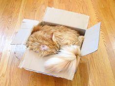 .fluffy long-haired kitty | Почему кошки прячутся в коробках и подолгу спят? История в 18 фотографиях.