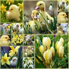 spring with yellow Happy Spring, Hello Spring, Beautiful Collage, Beautiful Birds, Spring Is Here, Spring Time, Collages, Pot Pourri, Spring Images