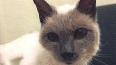 Dünyanın en yaşlı kedisi Scooter 30 yaşında öldü