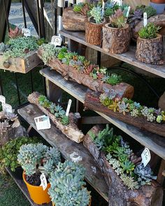 The Succulent Guy at the Byron Bay Beachside Market - Easter Saturday. by…