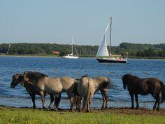 Goudplaat. Mooi natuurgebied op Noord Beveland aan het Veerse Meer.