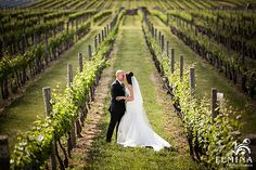 Beautiful Vineyard W