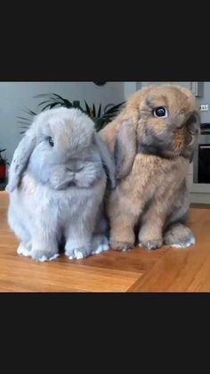 Cute Wild Animals, Cute Little Animals, Animals Beautiful, Animals And Pets, Cute Animal Memes, Funny Animal Videos, Cute Funny Animals, Cute Bunny Pictures, Cute Animal Photos