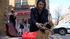 Afbeeldingsresultaat voor street cat bob