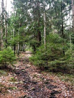 naturensdronning: Kald og bitende tur til Vardås