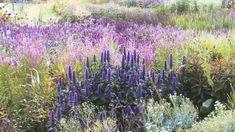 PIET OUDOLF'S COLORFUL PRAIRIE - PIET OUFOLF'S PLANTING BED - PIET OUDOLF'S GARDEN DESIGN Plant Design, Garden Design, Mobile Marketing, Home And Garden, Gardens, Business, Youtube, Plants, Color
